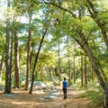 Tall trees provide a lot of shade during the middle of the day.- Trails, Tents + Tacos: Unrivaled Explorations in Tucson, AZ