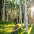Hiking among the aspens on Burlfriends Trail.- Burlfriends Trail Hike