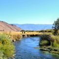 Fly fishing on the Owens River.- Exploring California's Eastern Sierra