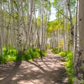 Utah's aspens are some of the best anywhere.- Burlfriends Trail Hike