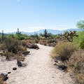 The sandy Bajada Nature Trail.- Trails, Tents + Tacos: Unrivaled Explorations in Tucson, AZ