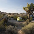 You'll feel like you are sleeping out in Dr. Seuss's storybooks here in Jumbo Rocks Campground in Joshua Tree National Park. - An Ode to Dr. Seuss