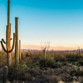 Sunset at Saguaro West.- Favorite Family-friendly Hikes in U.S. National Parks