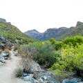 Hiking the Bear Canyon Trail to Seven Falls.- Trails, Tents + Tacos: Unrivaled Explorations in Tucson, AZ