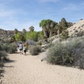 Cottonwood Spring Nature Trail - Mastodon Peak Loop.- 11 Best Day Hikes in Joshua Tree National Park