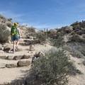 Cottonwood Springs Nature Trail - Mastodon Peak Loop.- 11 Best Day Hikes in Joshua Tree National Park