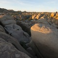 Evening sun at Jumbo Rocks Campground.- Joshua Tree National Park