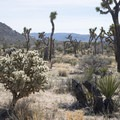 View south along the Wall Street Mill Trail.- Guide to Hiking in Joshua Tree National Park