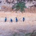 Cormorants on the cliffside along Geoffroy Drive.- Western Birding Hotspots