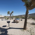 Typical campsite at Belle Campground.- A Guide to Camping in the Mojave Desert