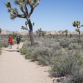 Hikers on the Ryan Ranch Trail.- Best Day Hikes Near Palm Springs