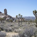 View of the Headstone Rock adjacent to Ryan Campground.- Best Day Hikes Near Palm Springs