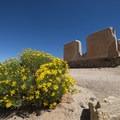 View of the Ryan Ranch adobe ruin, Joshua Tree- Early Season Wildflower Exploration: California Super Blooms in 2017