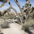 Barker Dam Trail in Joshua Tree National Park.- 11 Best Day Hikes in Joshua Tree National Park