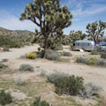 The pops of color at Black Rock Canyon Campground in Joshua Tree National Monument are very reminiscent of Seuss's illustrations. - An Ode to Dr. Seuss