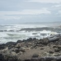 View north from Smelt Sands State Park.- Navigating the Oregon Coast Trail