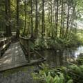 Small bridge along the Beaver Pond Trail.- Sasquatch Provincial Park