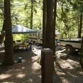 Typical campsite at Hicks Lake Campground.- Sasquatch Provincial Park