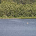 Angler on Deer Lake.- Sasquatch Provincial Park