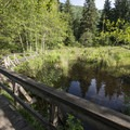 Short interpretive trail along the lake connecting Lakeside and Bench Campgrounds.- Sasquatch Provincial Park
