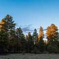 Sunset on the ponderosa forest near Ten-X Campground.- Guide to Camping in Grand Canyon National Park