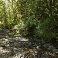 Windfall Creek adjacent to Entrance Bay Campground.- Cultus Lake Provincial Park