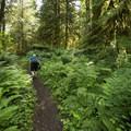 Giant Douglas Fir Trail.- Cultus Lake Provincial Park