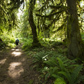 Giant Douglas Fir Trail.- 5 Reasons Why You Should Spend a Weekend at Cultus Lake