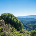 Saratoga Gap Trail.- Best Hikes in the Bay Area