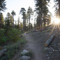 Early morning light along Champion Lodgepole Pine Trail.- 3-day Itinerary for Big Bear Lake, California