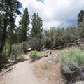 Woodland Interpretive Trail.- 3-day Itinerary for Big Bear Lake, California