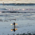 Surfing at Pleasure Point near Santa Cruz.- Best West Coast Beaches for Beginner Surfers