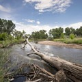 South Platte River at Chatfield State Park.- Chatfield State Park