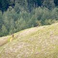 Mountain bikers in Russian Ridge Open Space Preserve.- 10 Microadventures Near San Francisco