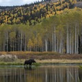 A moose at Willow Heights.- 50 Favorite Hikes in Utah