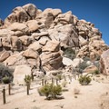The Hidden Valley Nature Trail winds through incredible rock piles.- Guide to Hiking in Joshua Tree National Park