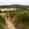 Sandy trails lead through the shrubby parts of the Carter Dunes walk.- Oregon Dunes Restoration