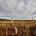 Fern Ridge Wildlife Area, East Coyote Unit.- Western Birding Hotspots