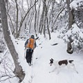 Hiking Ferguson Canyon in winter.- 5 Safe and Easy Ways to Enjoy Winter in the Wasatch