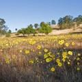 The William L. Findley National Wildlife Refuge includes a large area of upland oak savannahs.- Western Birding Hotspots