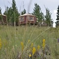 Wildflowers abound in early summer at the Phoenix Ridge Backcountry Yurt.- Glamping
