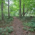 After the vineyard, the path gently wanders through a mixed hardwood forest.- Finger Lakes Trail: Mitchellsville Gorge
