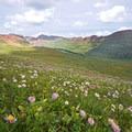 Fravert Basin wildflowers in Maroon Bells-Snowmass Wilderness.- Wander Among Wilderness Areas