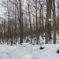 Snow-covered trails in Franny Reese State Park. - Hudson Valley's 12 Best Winter Adventures