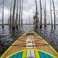 Paddling among leafless cypress and tupelo on Black Bayou Lake.- Paddler's Guide to Louisiana Swamps, Lakes + Bayous