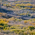 Aspens light up in fall on Steens Mountain.- Oregon Fall Adventures