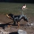 Dog-friendly rivers and a stick-loving dog at Gila Box.- Arizona Swimming Holes