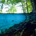 There's lots of plant and wildlife to be observed above and below the water at Ginnie Springs.- The Ultimate Florida Road Trip Part I: Northwest Florida