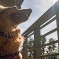 Nothing better than enjoying a great view with your four-legged hiking companion.- What You Need to Know Before Exploring Public Lands With Your Dog