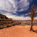 Limited shade at Cedar Ridge.- South Kaibab + Bright Angel Trails